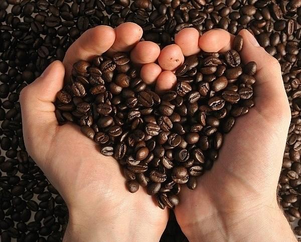TT cà phê ngày 28/6: Tiếp tục đà giảm giá xuống ở 32.500 – 33.800 đồng/kg