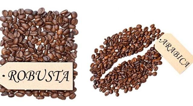TT cà phê ngày 05/02: Giá trong nước giao dịch ở mức 31.200 – 31.700 đồng/kg