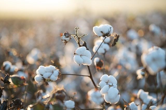 Giá nông sản thế giới chi tiết hôm nay 01/4/2021