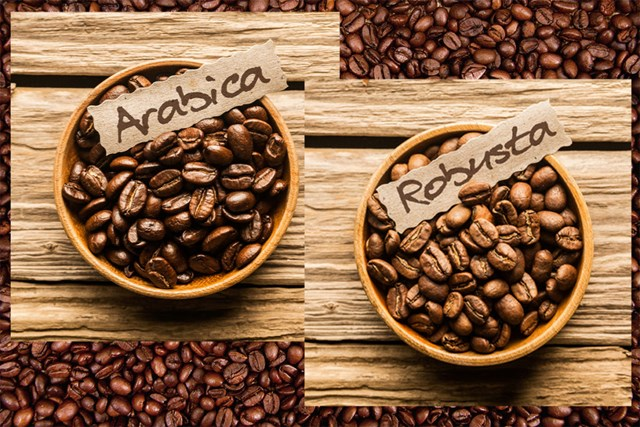 Giá cà phê tuần 31 (02/8 – 07/8) tuột dốc do đầu cơ chốt lời ngắn hạn