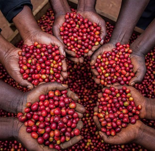 TT cà phê tháng 7/2020: Giá trong nước và thế giới đồng loạt tăng khá
