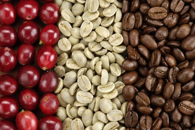 TT cà phê ngày 08/11: Giá tiếp tục hồi phục mạnh