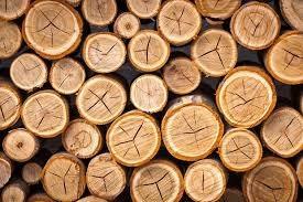 Giá gỗ xẻ tại CME sáng ngày  02/11/2016