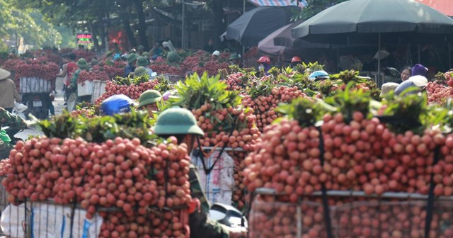 TT nông sản ngày 10/6: 70.000 tấn vải thiều Bắc Giang sẽ được XK sang Trung Quốc