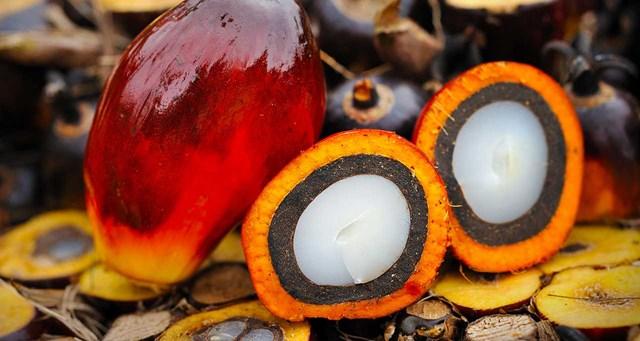 Chính phủ Ấn Độ cho phép mua dầu ăn tinh luyện khiến lượng dầu cọ nhập khẩu trong tháng 8/2021 tăng