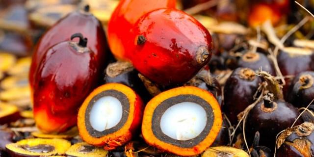 Giá dầu cọ Malaysia chạm mức thấp 5 tuần do nguồn cung dồi dào