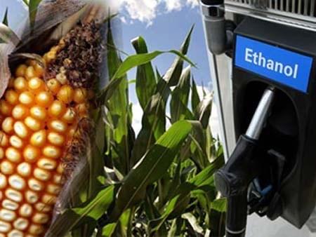 Giá ethanol của Brazil giảm do việc nghiền mía tăng tốc