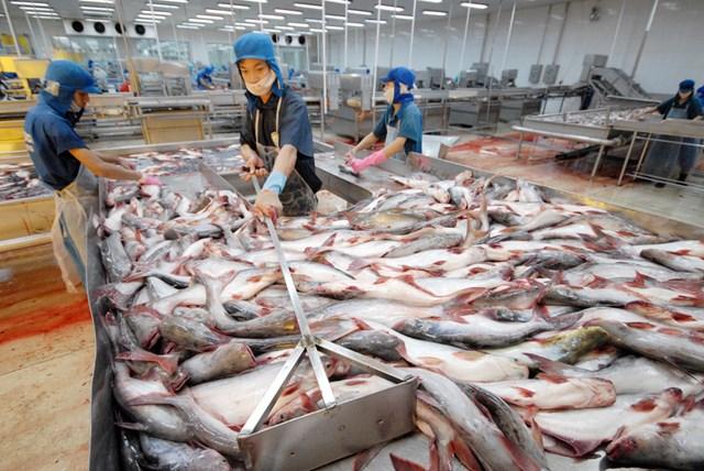Xuất khẩu cá tra sang Tây Ban Nha giảm 45%