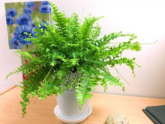 10 loại cây chống nồm, hút ẩm cực tốt