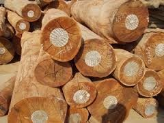 Việt Nam tăng nhập khẩu gỗ và sản phẩm từ thị trường Nam Phi
