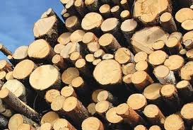 Giá gỗ nguyên liệu nhập khẩu tuần từ 10/4 đến 13/4/2017