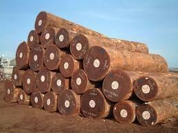 Giá gỗ nguyên liệu nhập khẩu tuần từ 26/10 đến 1/11/2018