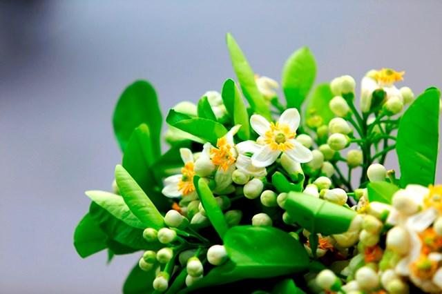 TT rau quả tuần qua: Giá tỏi Lý Sơn giảm, hoa bưởi tăng mạnh