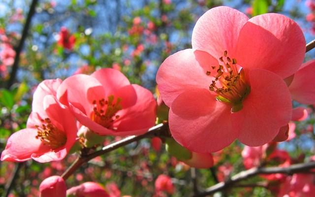 TT hoa cây cảnh những ngày sắp Tết: Sôi động trên khắp cả nước