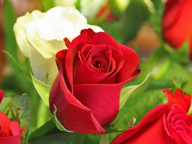 TT Đà Lạt: Rau xanh và hoa đã bình ổn trở lại