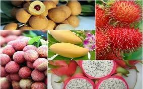 Phát triển ngành trái cây - Bài 1: Thị trường rộng mở