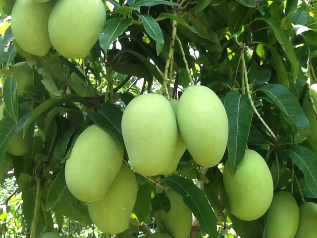 TT trái cây tuần qua: Loại quả thứ 6 của Việt Nam chinh phục thị trường khó tính