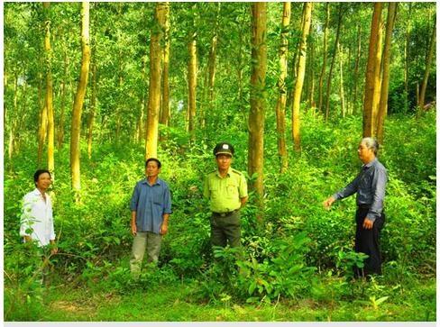 Liên kết trong ngành gỗ - Tăng cơ hội, giảm rủi ro cho phát triển bền vững