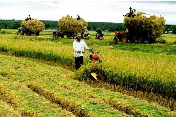 Tình hình sản xuất nông nghiệp tháng 7, 7 tháng đầu năm 2019