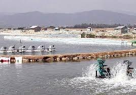 Sản lượng nuôi trồng thủy sản tháng 8 tăng 5,7%