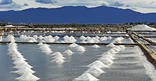Mưa trái mùa, sản lượng thu hoạch giảm khiến giá muối tăng cao