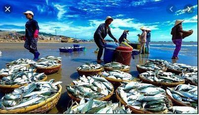 Sản xuất và nuôi trồng thủy sản 9 tháng năm 2019 đều tăng khá