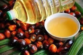 Malaysia duy trì sản xuất dầu cọ để đảm bảo nguồn cung toàn cầu