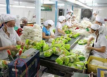 TT rau quả  26/6: Cơ hội lớn để mở rộng thị trường xuất khẩu rau quả