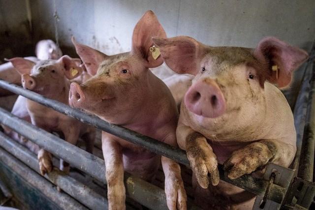 """Phát hiện virus cúm có """"tiềm năng gây đại dịch"""" ở Trung Quốc"""