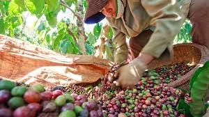 Các thị trường xuất khẩu cà phê lớn nhất trong 6 tháng đầu năm 2020
