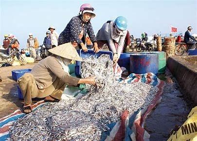 Giá nước mắm tăng cao do nguồn cá cơm khan hiếm