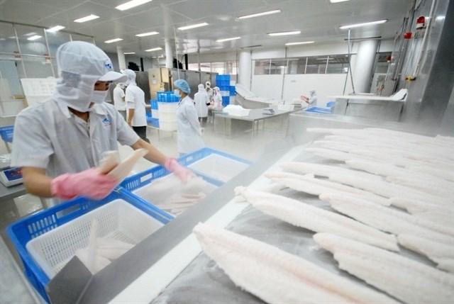 Anh - điểm sáng nhất trong bức tranh xuất khẩu cá tra 8 tháng đầu năm nay