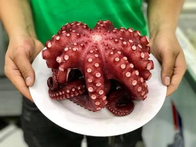 Xuất khẩu mực, bạch tuộc sang Trung Quốc tăng 53%