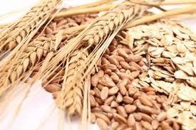 Thị trường TĂCN thế giới ngày 2/12/2020: Giá lúa mì gần mức  thấp nhất 2 tháng