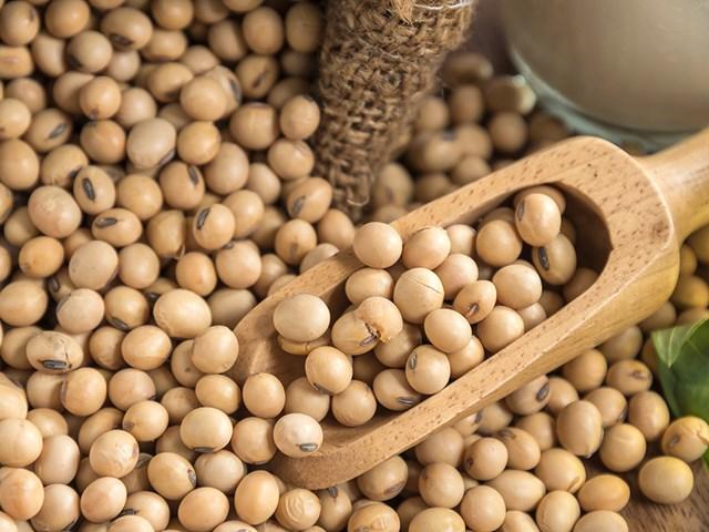Xu hướng tăng của nhóm sản phẩm đậu tương vẫn chưa có dấu hiệu yếu đi