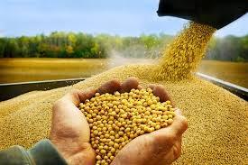 TT ngũ cốc thế giới ngày 03/02/2021: Ngô, đậu tương giảm giá, lúa mì ít thay đổi