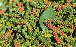 Hà Lan ưa chuộng nhiều loại nông sản Việt Nam