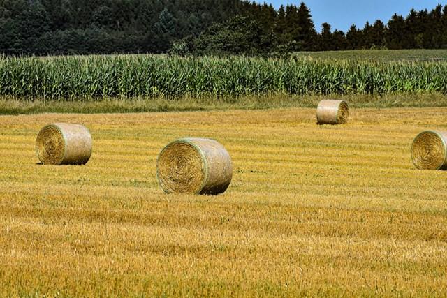 TT ngũ cốc thế giới ngày 18/2/2021: Lúa mì tiếp tục giảm giá