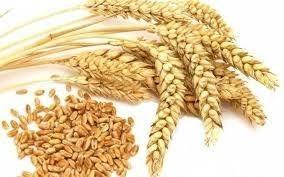 Xuất khẩu lúa mì, bột mì và sản phẩm lúa mì thế giới từ năm 2016-2021