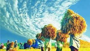 Năm 2020: Brazil đã đáp ứng 10% nhu cầu lương thực toàn cầu