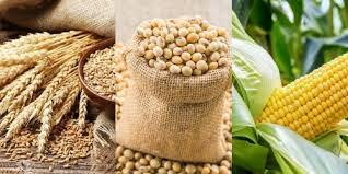 Trung Quốc tăng giá thu mua ngũ cốc, hỗ trợ ngành chăn nuôi