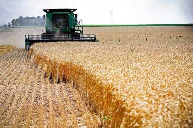 Ukraine dự kiến vụ ngũ cốc năm 2021 tăng kỷ lục