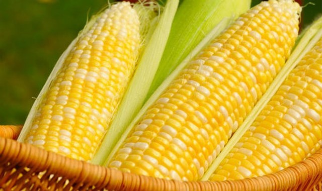 Brazil khuyến khích nông dân trồng nhiều ngô vụ hè