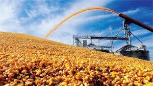 Nông dân trồng lúa mì trắng của Mỹ hưởng lợi khi nhu cầu ở Trung Quốc tăng