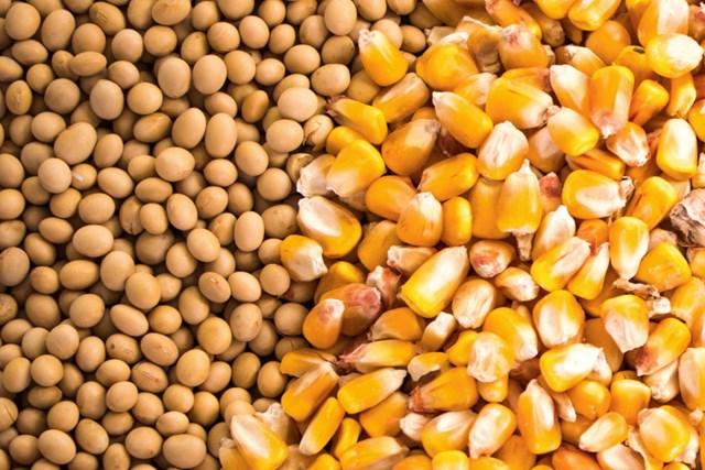 TT ngũ cốc thế giới ngày 31/03/2021:Đậu tương đã sẵn sàng cho đợt giảm hàng tháng đầu tiên