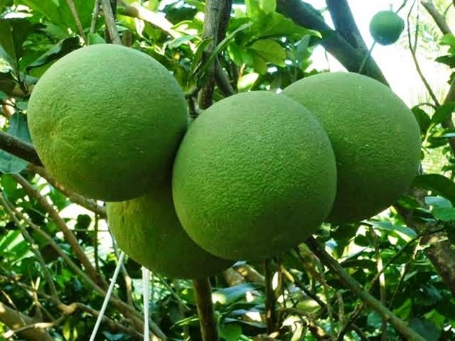 Giá thực phẩm ngày 5/4: Rau xanh và một số loại trái cây giảm giá nhẹ