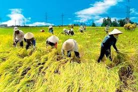Argentina: Thời tiết khô ráo giúp cho việc thu hoạch đậu tương, ngô thuận lợi