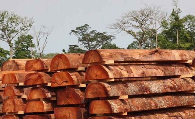 Loại bỏ ngay rủi ro từ gỗ nhiệt đới nhập khẩu