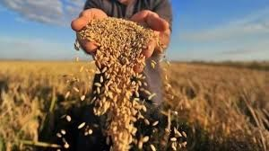 TT ngũ cốc thế giới ngày 11/05/2021: Giá ngô giảm gần 1% do 0lo ngại nguồn cung toàn cầu nóng lên