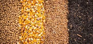 TT ngũ cốc thế giới ngày 12/05/2021: Giá đậu tương đạt mức cao nhất 9 năm
